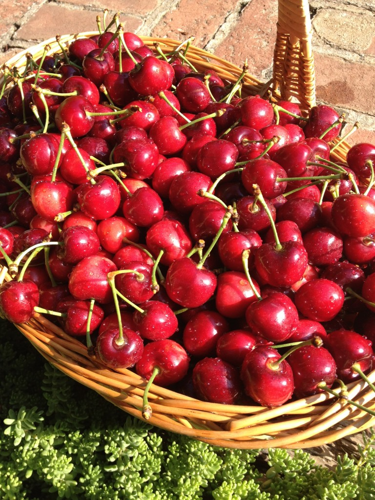 Cherries from Nola Orchards in Stockton, Calif.