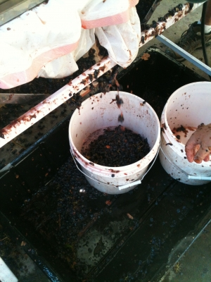 Winemaking is a Messy Process