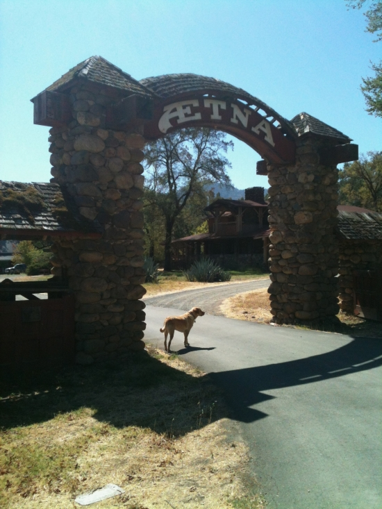 Aetna Springs Resort (with Trent's dog Chachi)